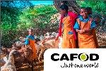 Cafod-Widget-Link